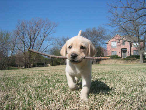 Walk_fast_and_carry_a_big_stick